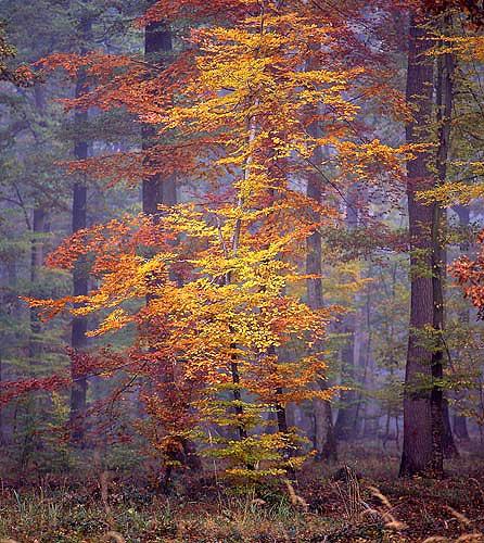 Forêt domaniale d'Armainvilliers patrimoine rer e